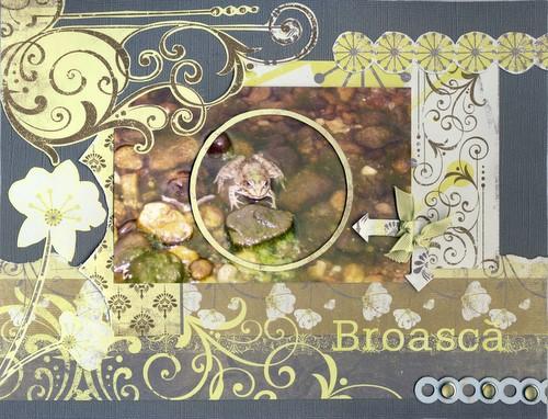 broasca-1.jpg